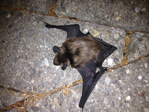 bat on sidewalk